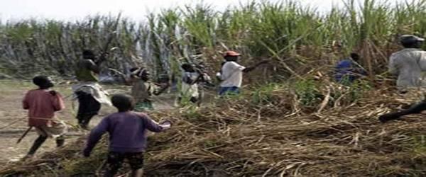 Maranhenses viviam como escravos em fazenda de soja