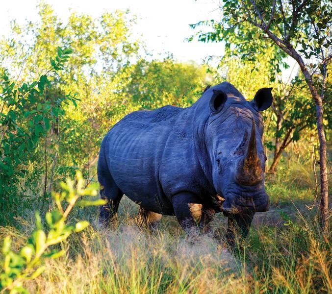 África do Sul006