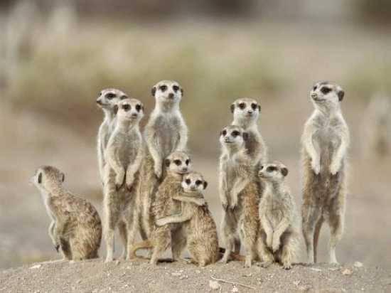 Ir à África com o intuito de observar animais selvagens, terá que fazer uma viagem específica para esse fim