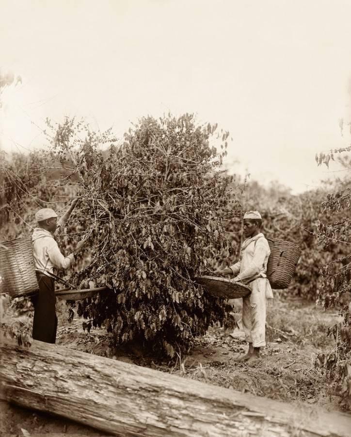 Escravidão Fotografias006 10 raras fotografias de escravos brasileiros feitas 150 anos atrás