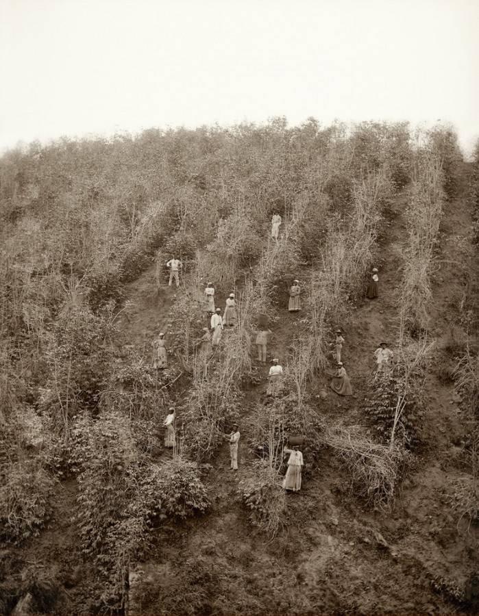 Escravidão Fotografias007 10 raras fotografias de escravos brasileiros feitas 150 anos atrás