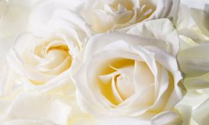 flores-brancas