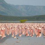 Lake Bogoria4