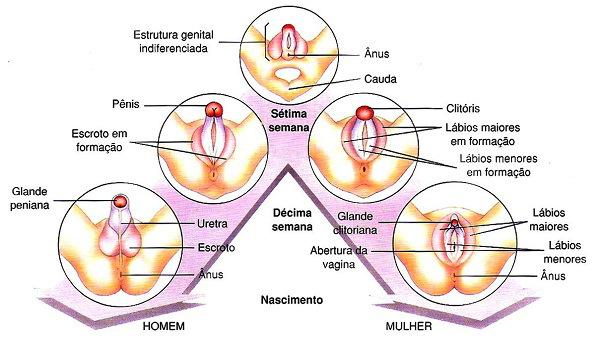 anatomia1