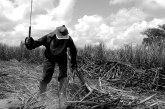 ONU manifesta preocupação com projeto de lei que altera conceito de trabalho escravo no Brasil