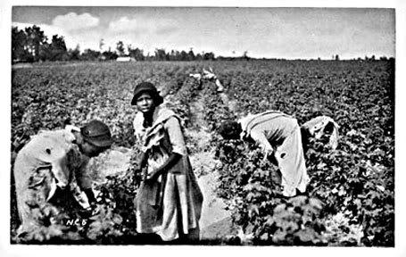 Cotton-slavary – NegroWomen-SlavesPickingCotton