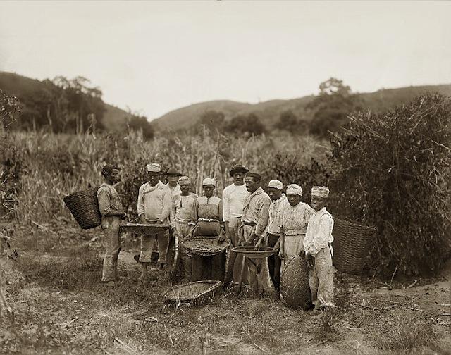 "Enlargement of ""Slaves in the coffee harvest, Rio de Janeiro, Brazil"