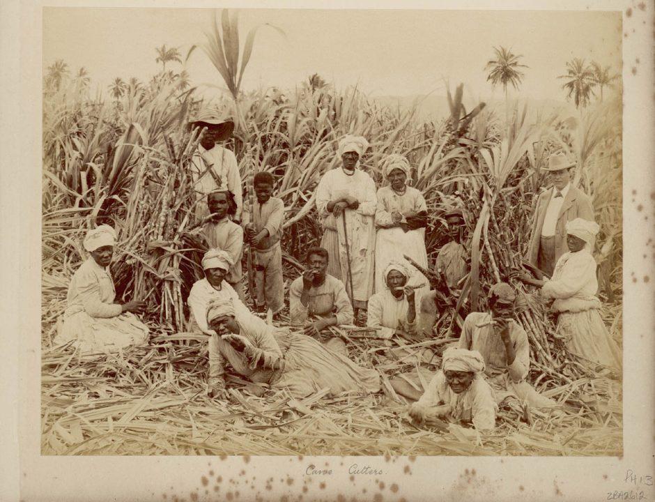 Sugar-cane cutters in Jamaica
