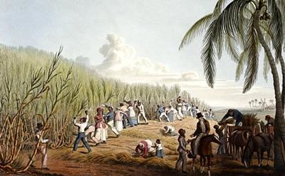 sugarcane-plantations1