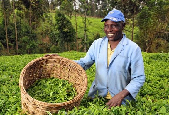 África poderia alimentar o mundo inteiro