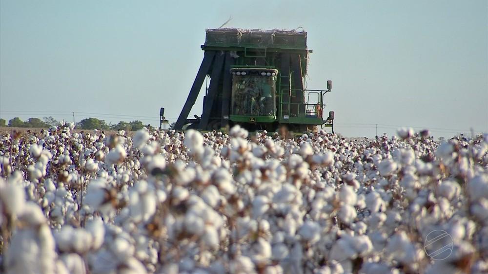 Número de mulheres que operam máquinas agrícolas aumenta em MT