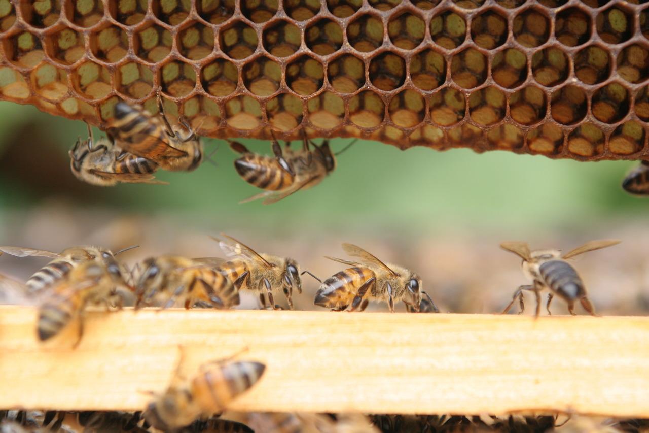 """Na categoria especial da premiação, serão avaliadas reportagens com o tema """"O futuro em risco: a mortandade das abelhas"""" (Renato Stockler)"""