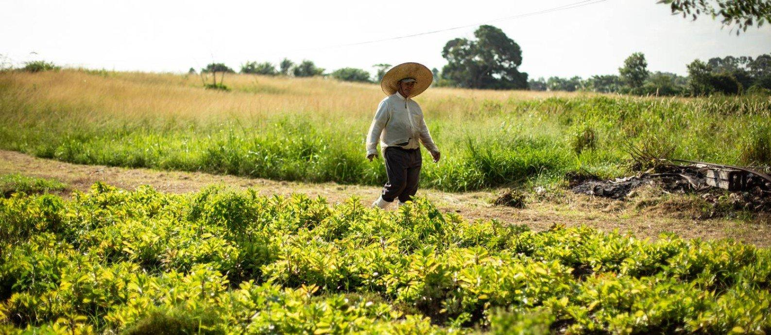 Imagem de um agricultor no campo