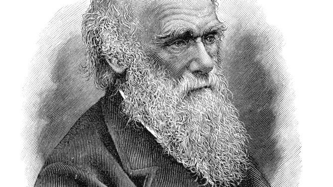 GETTY IMAGES Image caption 'Darwin ficou encantado com a nossa biodiversidade. A Mata Atlântica foi o bioma mais rico que ele conheceu. Por outro lado, ficou revoltado com a escravidão. Sua família lutava contra o comércio de escravos', afirma o biólogo Nélio Bizzo