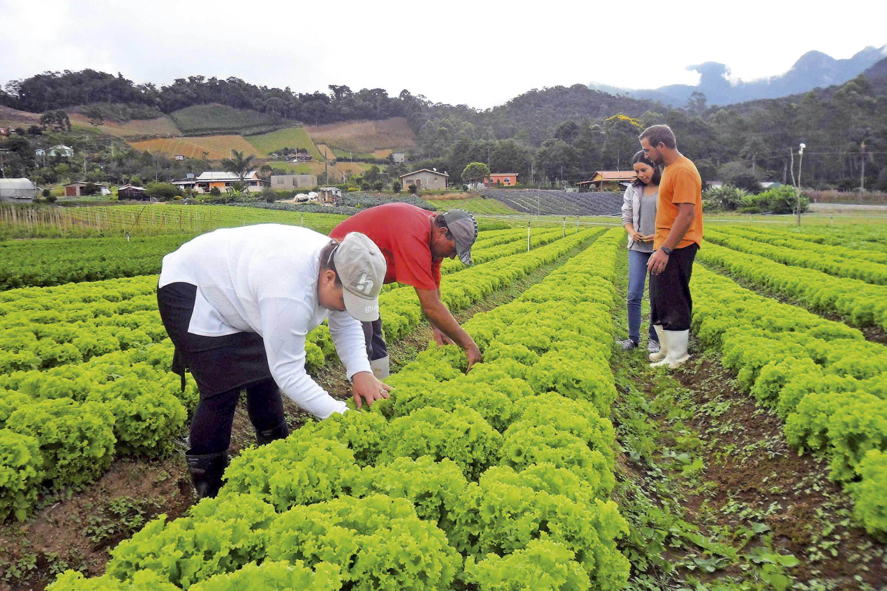 Apenas 19% de produtores rurais do país são mulheres