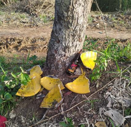 Caso foi registrado em Cachoeira, no Recôncavo baiano — Foto: Pai Duda de Candola/Arquivo pessoal