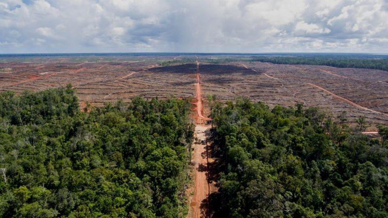 A rica floresta tropical de Papua, um dos lugares com maior biodiversidade do planeta, está ameaçada pelo desmatamento (Foto: MIGHTY EARTH)